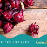 La Groseille-pays « Gwozèy péyi »